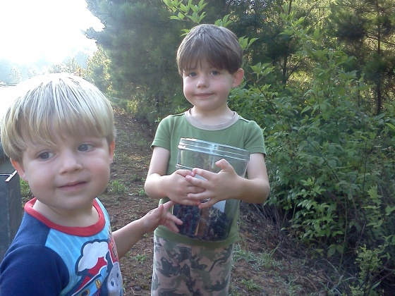 Boys and blackberries2
